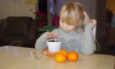 Lastele meeldib mandariiniseemneid mulda panna.