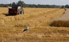 Tänavune teraviljasaak tuleb mullusest poole väiksem