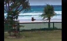 Humoorikas VIDEO: Vabadus südames! Jälgi, kuidas see koer mere poole kappab