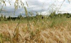 Tuulekaer Raplamaa viljapõllul.