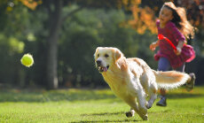 Kuidas saavutada hea üksteisemõistmine oma koeraga?