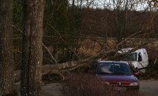 FOTO: Tugev tuul kukutas Paides puu auto peale