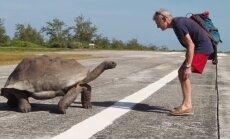 YouTube'i-hitt: vaata, mis juhtub, kui kaameramees läheb kilpkonnade armuelu segama!