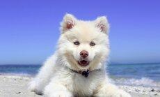 5 levinud fakti: kui hästi sa koeri tunned?