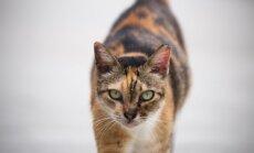 8 asendit: mida räägib sinu kassi saba tema emotsioonide kohta?