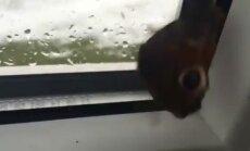 LUGEJA VIDEO: Sügiskuu keskpaigas on liblikal veel energiat küllalt