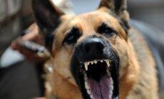 VIDEO: Kuidas end kaitsta, kui võõras koer peaks ründama?