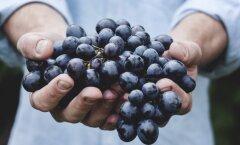 Kogu tõde puuviljadest: maitsvad ja magusad, aga kas ka tervislikud?