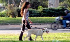 Väike samm, suur muutus: mis juhtub, kui jalutad iga päev 10 minutit?