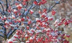 Синоптик: первый снег выпадет уже на следующей неделе