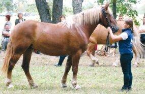 Maamessil saab ka hobusele pai teha