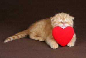 ÜRITUS: MTÜ Kasside Turvakodu kutsub südamlikule sõbrapäevapeole