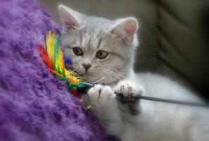 Miks kass nii teeb? 5 selgitust kasside kummalisele käitumisele