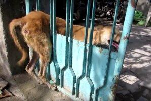 Südantlõhestav VIDEO: See, kuidas reageeris kodutu koer, kui talle viimaks appi tuldi, üllatas ka päästjaid