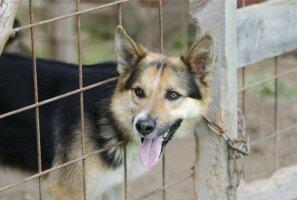 Tallinnas hakkab kodutute loomade varjupaigateenust pakkuma Varjupaikade MTÜ