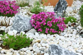 Kuidas rajada kaunis ja mitmekesine kiviktaimla