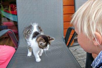 Isa blogi: Mis oleks kodus teistmoodi, kui mina oleksin meie pere otsustaja?