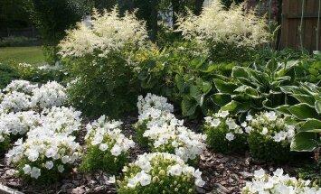 Vaata, millistel põhimõtetel luukse tervendavaid aedu