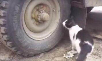 VIDEO: Kaotasidki ära, jah? Tark rott kavaldab üle teda meeleheitlikult otsiva kassi