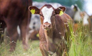 Kõige enam on avatud talude päeval osalema registreerunud ettevõtjaid Harjumaalt (24), Pärnumaalt (23), Lääne-Virumaalt (19).