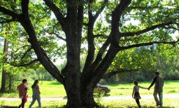 """<a href=""""http://blog.maaleht.ee/leilimetsalood/?p=8654"""" target=""""_blank"""">Leili metsalood: Vana puu ja uued inimesed</a>"""