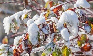 Soomes tuleb järgmisel nädalal paks lumi maha!