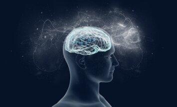 Kiviaja pihukirves muutis inimaju