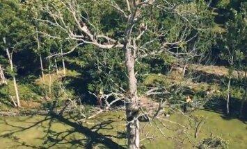 VIDEOD: Mida teha aias kõrguva vana puuga? Väärikalt veteraniseerida!