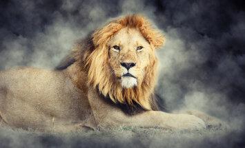Vali silmailuks ja söögiks oma tähemärgile sobivad taimed. Kingiideed südasuve sümbolile – Lõvile!