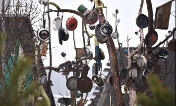Необычное сковородочное дерево в Литве — кто и зачем его создал