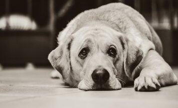 5 märki: Kas minu koer on stressis? Kuidas seda leevendada?