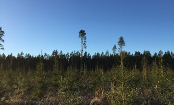 Ants Erik: metsamaa maksustamine toimub siiski valedel alustel