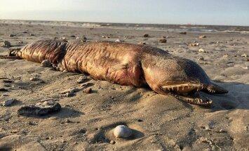 """Ураган """"Харви"""" выбросил """"чудовище"""" на пляж в Техасе"""
