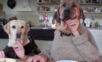 VIDEO: Naera või pisar silma! Paroodia koertest, kes kannatamatult laua taga süüa ootavad