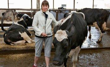 Leia Nõojärv selgitab, et lehmade kõrge piimaanni on taganud oskuslik aretustöö, samuti loomade õige söödaratsioon.