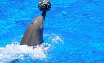 Delfiin: 12 põnevat fakti ühe erakordse looma kohta