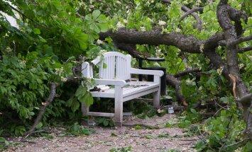 Kadriorus kukkus puu inimesele peale