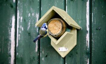 Uusim trend lindude toitmises - maapähklivõi