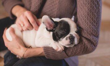Reisihing või loomasõber: Uus veebileht, mis võimaldab ööbida unistuste majas ja vastutasuks hoida silm peal kohaliku pere lemmikloomadel