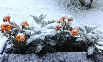 Прогноз не обманул. Присылайте фото первого снега!