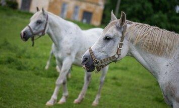 Odavad hobused