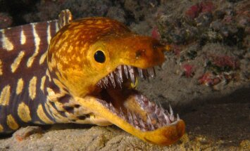 Veealune maailm: kalaliigid teevad omavahel koostööd