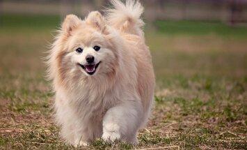 Millal on lemmiklooma omanikul kindlustusest kõige enam abi?