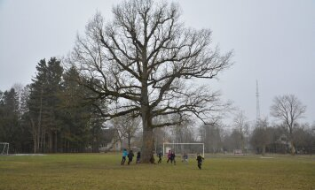 Eestlased tegid ära: Orissaare tamm valiti Euroopa aasta puuks!