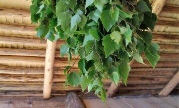 Vanal kuul tehtud kasevihas on üheksa rohtu