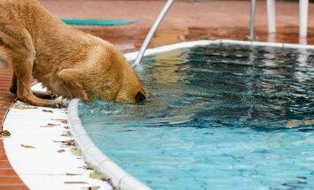 VIDEO: Geniaalne koer, kes omapärasel moel oma hinnalise palli basseinist päästab