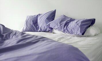 Tolmulestade eelistatuim elupaik on voodi.