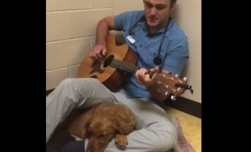 Vaata VIDEOT: Südamlik veterinaar rahustab ärevat kutsikat talle kliinikus kitarri saatel lauldes