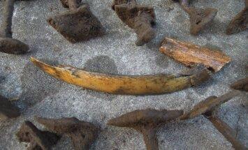 Harjumaal võib peituda viikingiaegne laevmatus: erakordset leidu hoitakse suure saladuskatte all