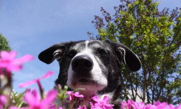 Hoia loomad eemal: kaheksa lemmikutele mürgist taime, mis kodudes ja aedades kasvavad